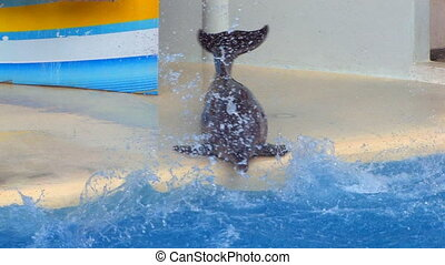 Two Dolfins moving around