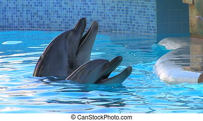 Two dolfins playing in the water,