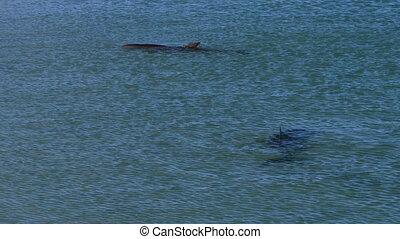 Two dolphin underwater shot