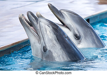 two dolphins in the pool