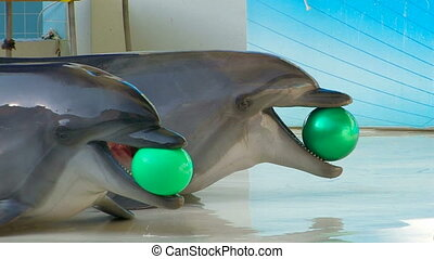 Two Dolphins playing with balls