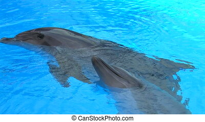 Two Dolphins swimming