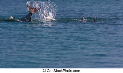 Two dolphins swimming majestically