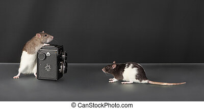 rats with an old camera
