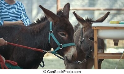 Two donkeys in stable, close up