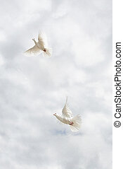 Two doves flying on sky.
