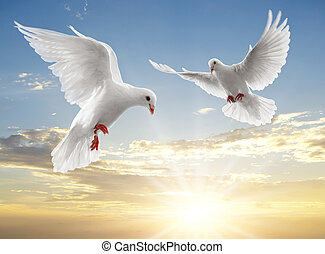 two doves looking down while flying on sky