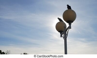 Two doves sitting on the lampposts. Beautiful picture with the birds in the sky. Wallpaper. 4k,