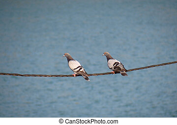 Two doves stand on a wire
