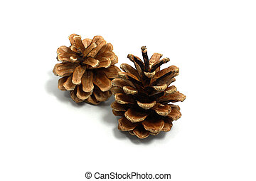 two dry pinecones isolated on white background