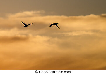 Two Ducks Flying in the Vibrant Sunset Sky