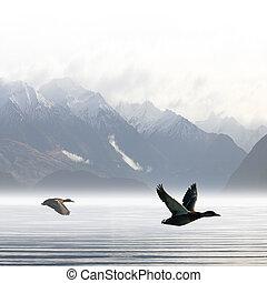 Ducks - Two Ducks Flying over Lake