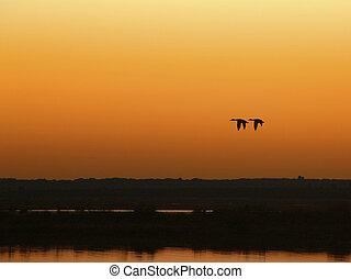 two ducks flying over the marsh at dusk