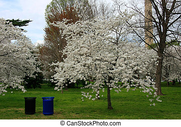 Two dustbins and cherry trees