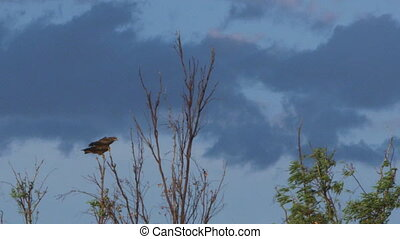 Two eagles sitting on top of a tree
