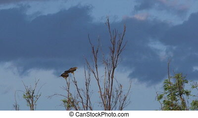 Two eagles sitting on top of a tree branch