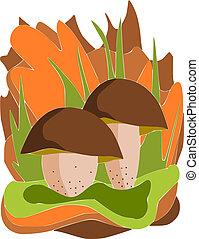 Two edible mushrooms - vector