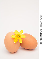 Two eggs and a yellow daffodil and copy space on white...