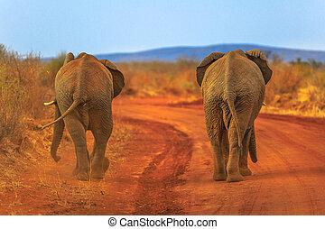 Two Elephant on red desert