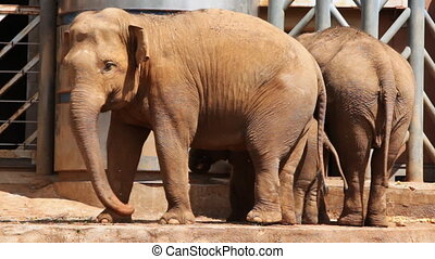 two elephants and small elephant between them, eat food in...
