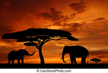 two elephants - Silhouette two elephants in the sunset