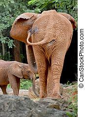 Two elephants form back side