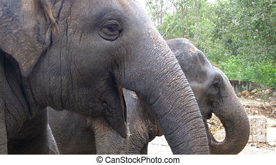 Two elephants in the pen Thailand - Two elephants in the...