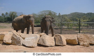 Two elephants standing at the zoo. Slow motion Close up.