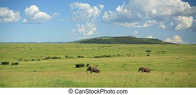 Two elephants walking through the Masai Mara