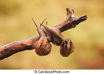 Two escargots sitting on a branch
