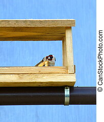 Two European goldfinches in the wooden feeder