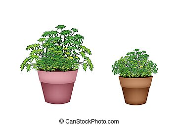Houseplant, An Illustration of Two Beautiful Green Plant in Terracotta Flower Pots for Garden Decoration.