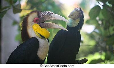 Two exotic birds sitting on a tree branch in the rainforest. Untouched natural beauty in the nature reserve. Large green leaves on the background.