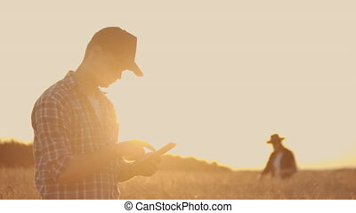 Two farmers, a man and a woman, are looking forward to the sunset over a field of wheat. Teamwork in agribusiness