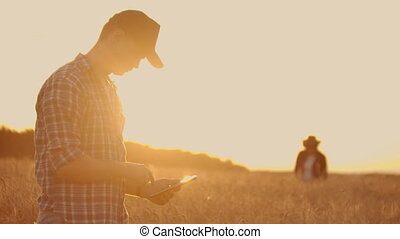 Two farmers, a man and a woman in a wheat field with a tablet computer work and analyze the success of the crop, touching the sprouts with his hands. Harvest planning
