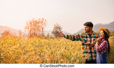 Two farmers man and woman standing in a wheat field watching the sunset. Lower view angle