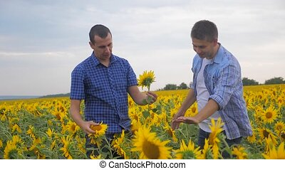 two farmers men business explore walking examining crop of...
