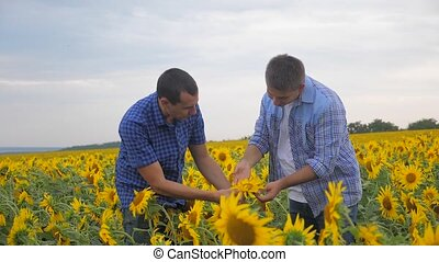 two farmers men business explore walking examining crop of...