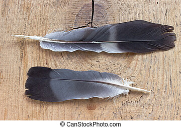 Two feathers on wooden background