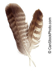 Two brown feathers - isolated on white