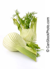 two fennel isolated on white background