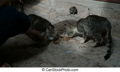 Two feral cat eat feed on the stone pavement near the house.