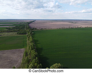 Two fields separated by a forest belt, aerial view. Agricultural landscape.