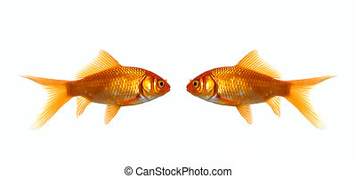 Two fish looking at each other