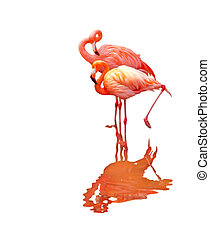 Two Flamingo Birds - Two flamingo birds isolated on white...