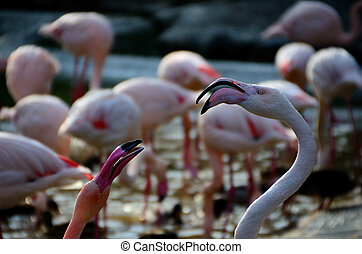 two flamingos look