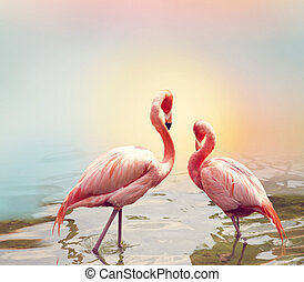 Two Flamingos near water
