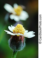 Two flowers - Two small flowers like lovers show in picture