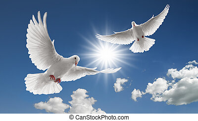 two flying doves - two doves flying with spread wings on sky