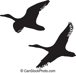 flying ducks  - two flying ducks vector silhouette